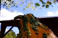 gourd2